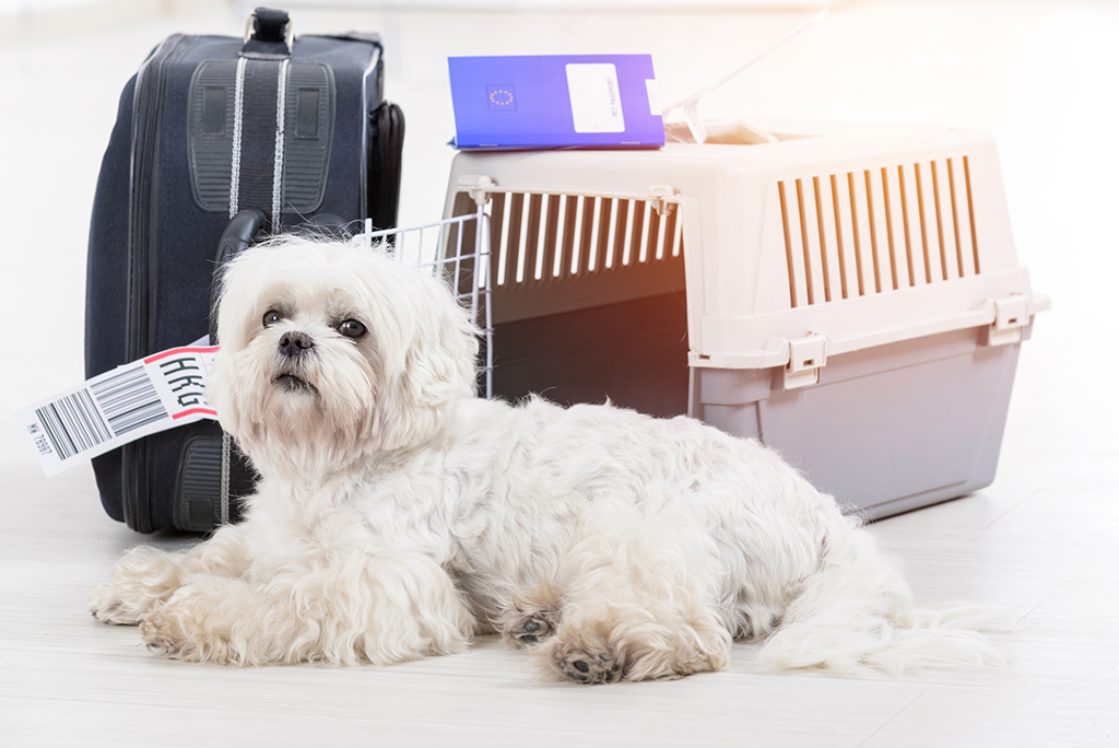 A Brief Guide for Moving Cross-Country with your pets
